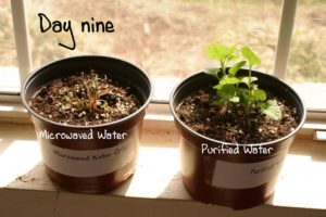 Blog 11-7-2015 Mircrowave Oven Plants 1